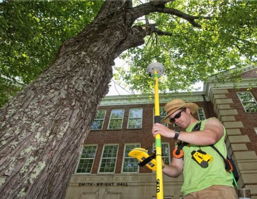 Arborist Consultations-Brandon FL Tree Trimming and Stump Grinding Services-We Offer Tree Trimming Services, Tree Removal, Tree Pruning, Tree Cutting, Residential and Commercial Tree Trimming Services, Storm Damage, Emergency Tree Removal, Land Clearing, Tree Companies, Tree Care Service, Stump Grinding, and we're the Best Tree Trimming Company Near You Guaranteed!