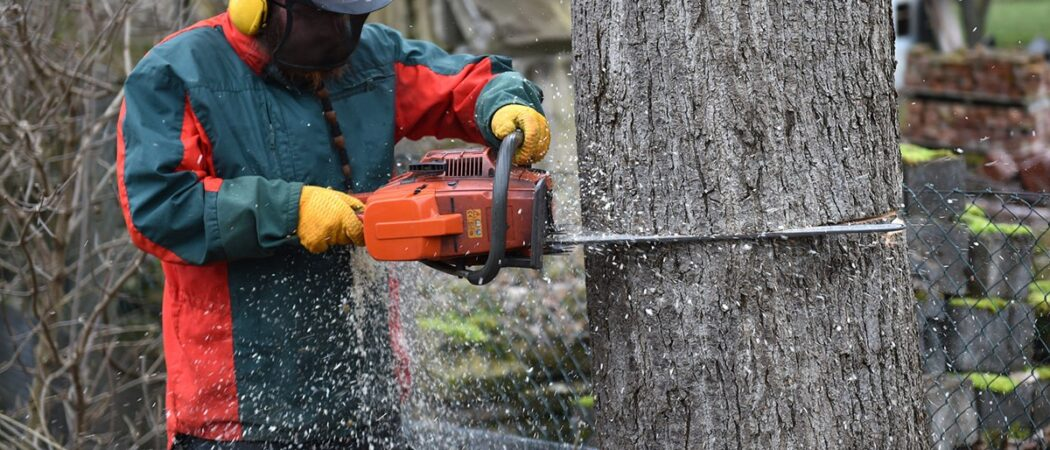 Brandon FL Tree Trimming and Stump Grinding Services Home Page Image-We Offer Tree Trimming Services, Tree Removal, Tree Pruning, Tree Cutting, Residential and Commercial Tree Trimming Services, Storm Damage, Emergency Tree Removal, Land Clearing, Tree Companies, Tree Care Service, Stump Grinding, and we're the Best Tree Trimming Company Near You Guaranteed!