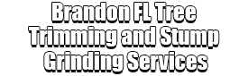 Brandon FL Tree Trimming and Stump Grinding Services Logo-We Offer Tree Trimming Services, Tree Removal, Tree Pruning, Tree Cutting, Residential and Commercial Tree Trimming Services, Storm Damage, Emergency Tree Removal, Land Clearing, Tree Companies, Tree Care Service, Stump Grinding, and we're the Best Tree Trimming Company Near You Guaranteed!