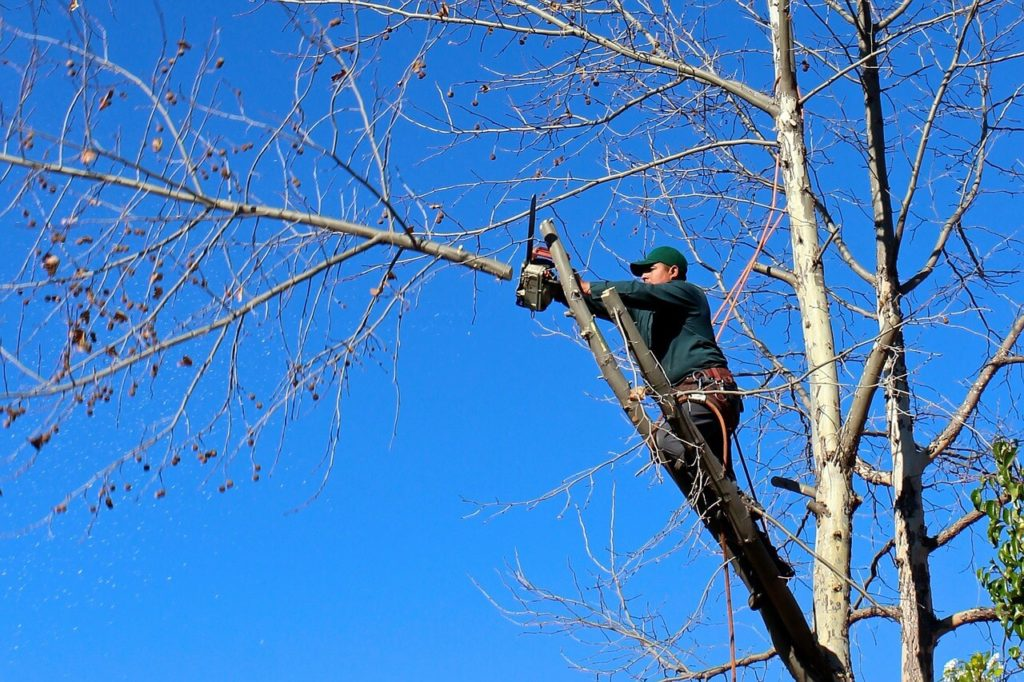 Contact Us-Brandon FL Tree Trimming and Stump Grinding Services-We Offer Tree Trimming Services, Tree Removal, Tree Pruning, Tree Cutting, Residential and Commercial Tree Trimming Services, Storm Damage, Emergency Tree Removal, Land Clearing, Tree Companies, Tree Care Service, Stump Grinding, and we're the Best Tree Trimming Company Near You Guaranteed!