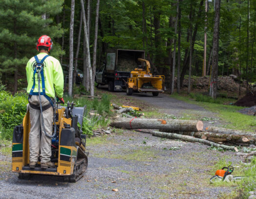 Emergency Tree Removal-Brandon FL Tree Trimming and Stump Grinding Services-We Offer Tree Trimming Services, Tree Removal, Tree Pruning, Tree Cutting, Residential and Commercial Tree Trimming Services, Storm Damage, Emergency Tree Removal, Land Clearing, Tree Companies, Tree Care Service, Stump Grinding, and we're the Best Tree Trimming Company Near You Guaranteed!