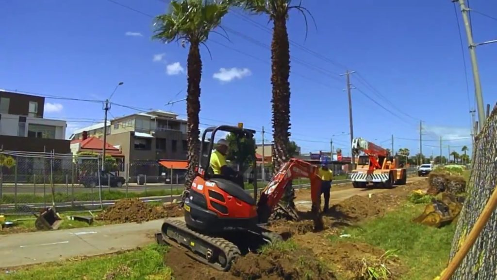 Palm Tree Removal-Brandon FL Tree Trimming and Stump Grinding Services-We Offer Tree Trimming Services, Tree Removal, Tree Pruning, Tree Cutting, Residential and Commercial Tree Trimming Services, Storm Damage, Emergency Tree Removal, Land Clearing, Tree Companies, Tree Care Service, Stump Grinding, and we're the Best Tree Trimming Company Near You Guaranteed!