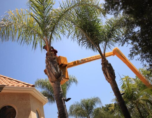 Palm Tree Trimming-Brandon FL Tree Trimming and Stump Grinding Services-We Offer Tree Trimming Services, Tree Removal, Tree Pruning, Tree Cutting, Residential and Commercial Tree Trimming Services, Storm Damage, Emergency Tree Removal, Land Clearing, Tree Companies, Tree Care Service, Stump Grinding, and we're the Best Tree Trimming Company Near You Guaranteed!