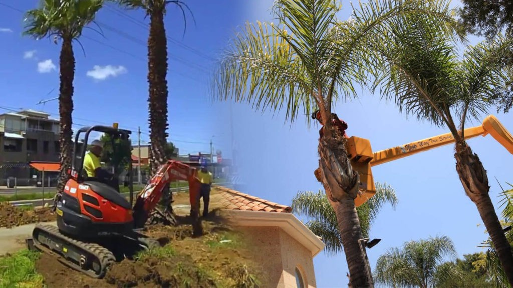 Palm tree trimming & palm tree removal-Brandon FL Tree Trimming and Stump Grinding Services-We Offer Tree Trimming Services, Tree Removal, Tree Pruning, Tree Cutting, Residential and Commercial Tree Trimming Services, Storm Damage, Emergency Tree Removal, Land Clearing, Tree Companies, Tree Care Service, Stump Grinding, and we're the Best Tree Trimming Company Near You Guaranteed!