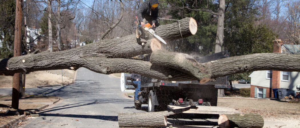 Residential Tree Services-Brandon FL Tree Trimming and Stump Grinding Services-We Offer Tree Trimming Services, Tree Removal, Tree Pruning, Tree Cutting, Residential and Commercial Tree Trimming Services, Storm Damage, Emergency Tree Removal, Land Clearing, Tree Companies, Tree Care Service, Stump Grinding, and we're the Best Tree Trimming Company Near You Guaranteed!