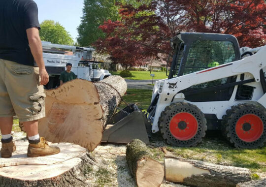 Services-Brandon FL Tree Trimming and Stump Grinding Services-We Offer Tree Trimming Services, Tree Removal, Tree Pruning, Tree Cutting, Residential and Commercial Tree Trimming Services, Storm Damage, Emergency Tree Removal, Land Clearing, Tree Companies, Tree Care Service, Stump Grinding, and we're the Best Tree Trimming Company Near You Guaranteed!