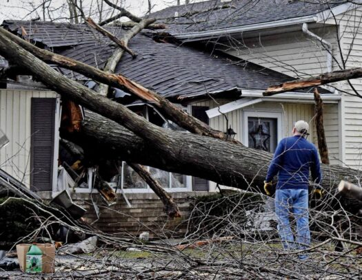 Storm Damage-Brandon FL Tree Trimming and Stump Grinding Services-We Offer Tree Trimming Services, Tree Removal, Tree Pruning, Tree Cutting, Residential and Commercial Tree Trimming Services, Storm Damage, Emergency Tree Removal, Land Clearing, Tree Companies, Tree Care Service, Stump Grinding, and we're the Best Tree Trimming Company Near You Guaranteed!