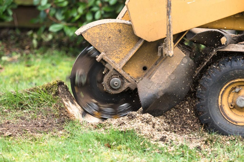 Stump Grinding-Brandon FL Tree Trimming and Stump Grinding Services-We Offer Tree Trimming Services, Tree Removal, Tree Pruning, Tree Cutting, Residential and Commercial Tree Trimming Services, Storm Damage, Emergency Tree Removal, Land Clearing, Tree Companies, Tree Care Service, Stump Grinding, and we're the Best Tree Trimming Company Near You Guaranteed!