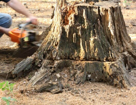 Stump Removal-Brandon FL Tree Trimming and Stump Grinding Services-We Offer Tree Trimming Services, Tree Removal, Tree Pruning, Tree Cutting, Residential and Commercial Tree Trimming Services, Storm Damage, Emergency Tree Removal, Land Clearing, Tree Companies, Tree Care Service, Stump Grinding, and we're the Best Tree Trimming Company Near You Guaranteed!