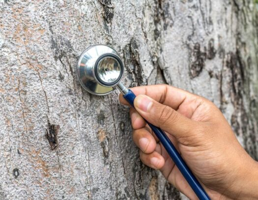Tree Assessments-Brandon FL Tree Trimming and Stump Grinding Services-We Offer Tree Trimming Services, Tree Removal, Tree Pruning, Tree Cutting, Residential and Commercial Tree Trimming Services, Storm Damage, Emergency Tree Removal, Land Clearing, Tree Companies, Tree Care Service, Stump Grinding, and we're the Best Tree Trimming Company Near You Guaranteed!