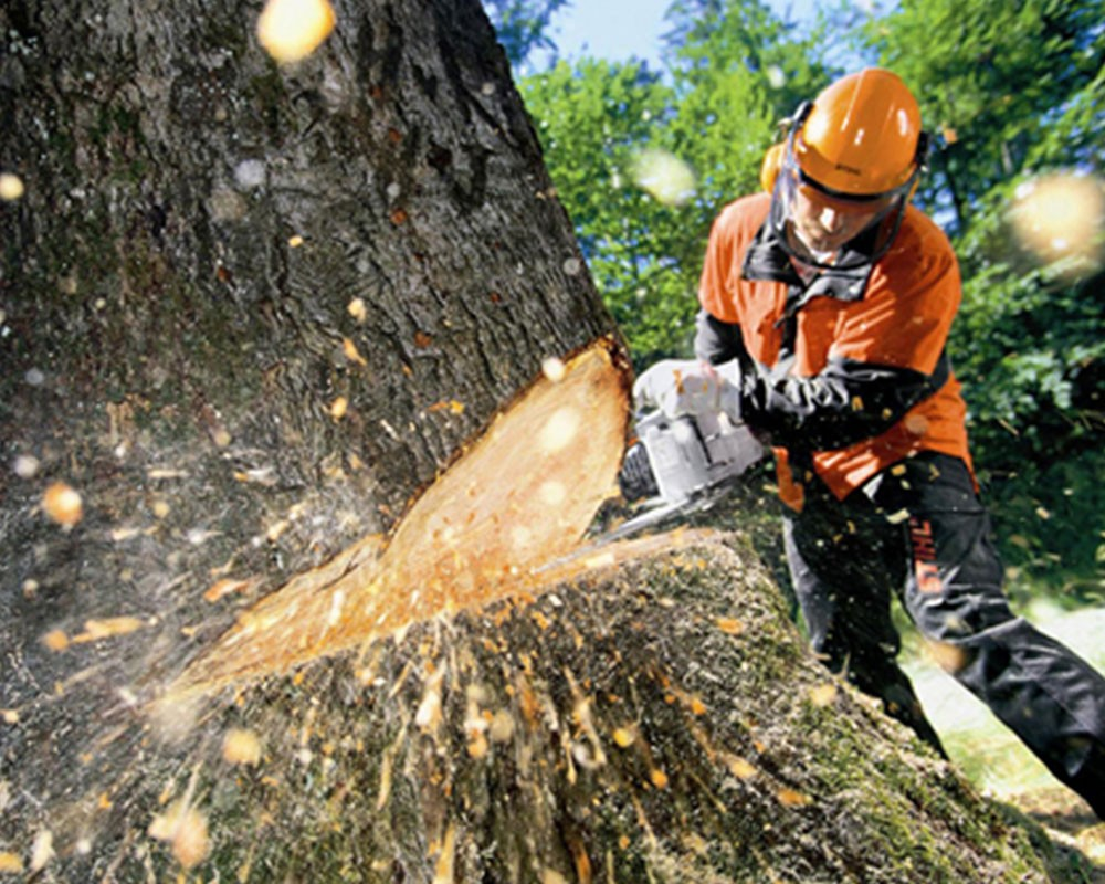 Tree Cutting-Brandon FL Tree Trimming and Stump Grinding Services-We Offer Tree Trimming Services, Tree Removal, Tree Pruning, Tree Cutting, Residential and Commercial Tree Trimming Services, Storm Damage, Emergency Tree Removal, Land Clearing, Tree Companies, Tree Care Service, Stump Grinding, and we're the Best Tree Trimming Company Near You Guaranteed!