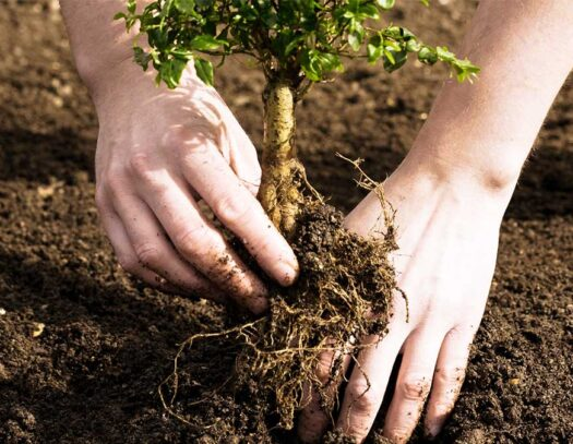 Tree Planting-Brandon FL Tree Trimming and Stump Grinding Services-We Offer Tree Trimming Services, Tree Removal, Tree Pruning, Tree Cutting, Residential and Commercial Tree Trimming Services, Storm Damage, Emergency Tree Removal, Land Clearing, Tree Companies, Tree Care Service, Stump Grinding, and we're the Best Tree Trimming Company Near You Guaranteed!