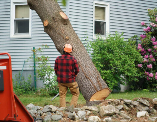 Tree Removal-Brandon FL Tree Trimming and Stump Grinding Services-We Offer Tree Trimming Services, Tree Removal, Tree Pruning, Tree Cutting, Residential and Commercial Tree Trimming Services, Storm Damage, Emergency Tree Removal, Land Clearing, Tree Companies, Tree Care Service, Stump Grinding, and we're the Best Tree Trimming Company Near You Guaranteed!