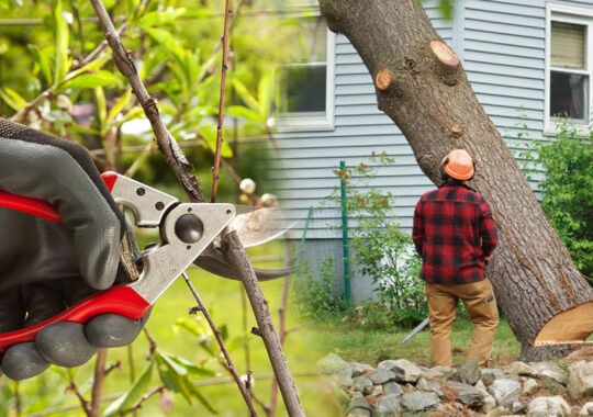 Tree pruning & tree removal-Brandon FL Tree Trimming and Stump Grinding Services-We Offer Tree Trimming Services, Tree Removal, Tree Pruning, Tree Cutting, Residential and Commercial Tree Trimming Services, Storm Damage, Emergency Tree Removal, Land Clearing, Tree Companies, Tree Care Service, Stump Grinding, and we're the Best Tree Trimming Company Near You Guaranteed!